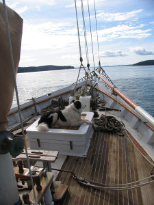 Spike_Africa_at_sea