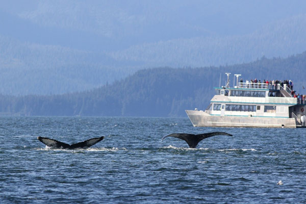 whale watching safely enjoyably