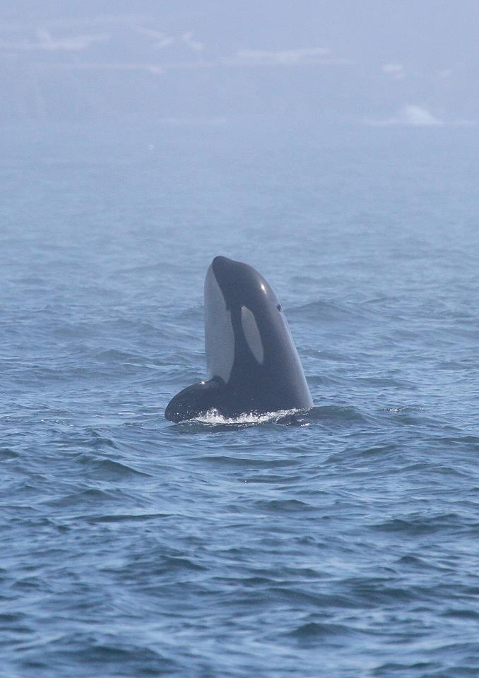 Top Reasons Why You Should Try Whale Watching in San Juan Islands