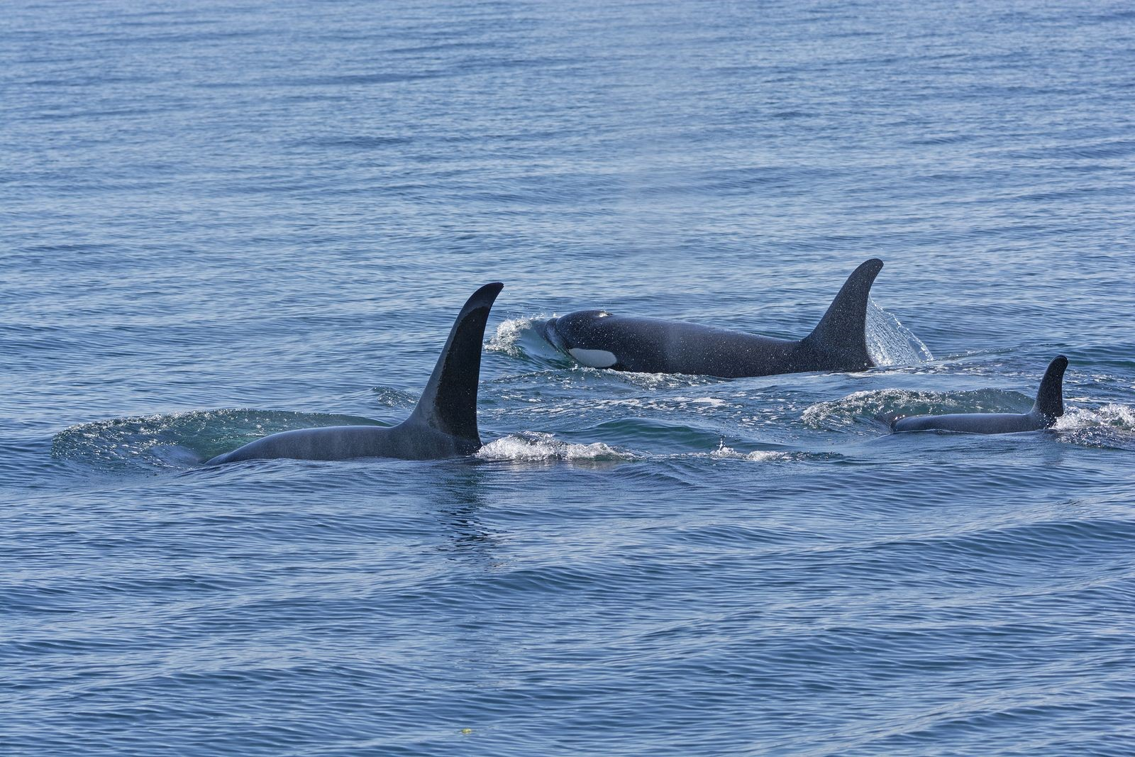 Are You Preparing Soon For A Little San Juan Island Whale Watching?