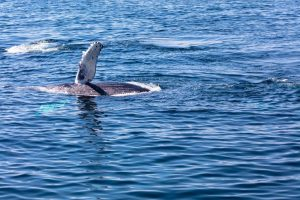 San Juan Islands Cruises Entertain the Seafaring Wildlife Watchers