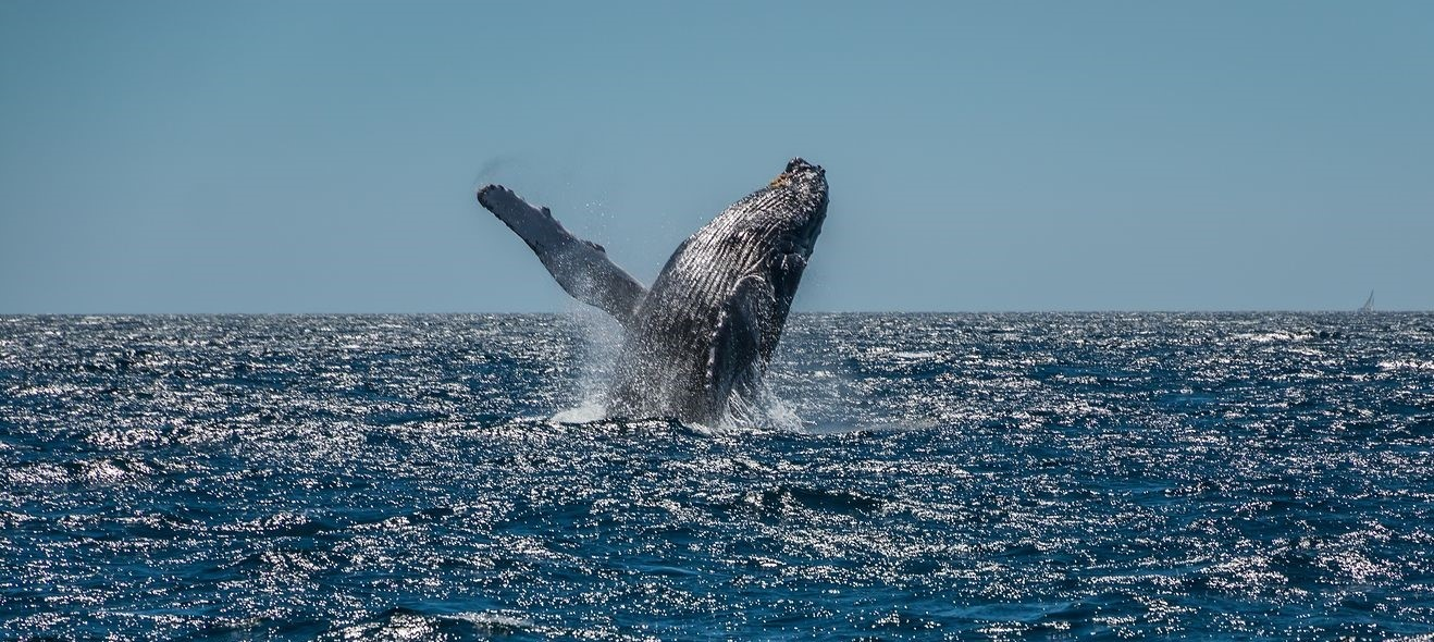 Whale Watching in the San Juan Islands Will Take Your Breath Away