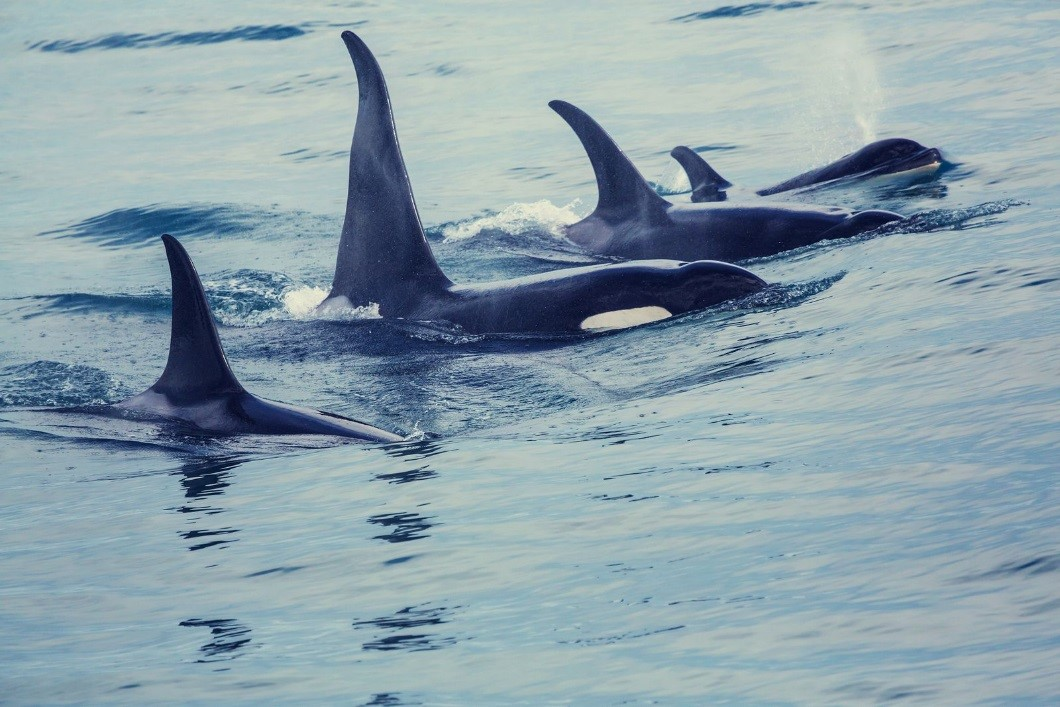 Top Places You Should Go When You're Taking San Juan Islands Cruises