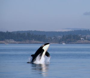 Some Responsible Practices You Should Observe While Whale Watching