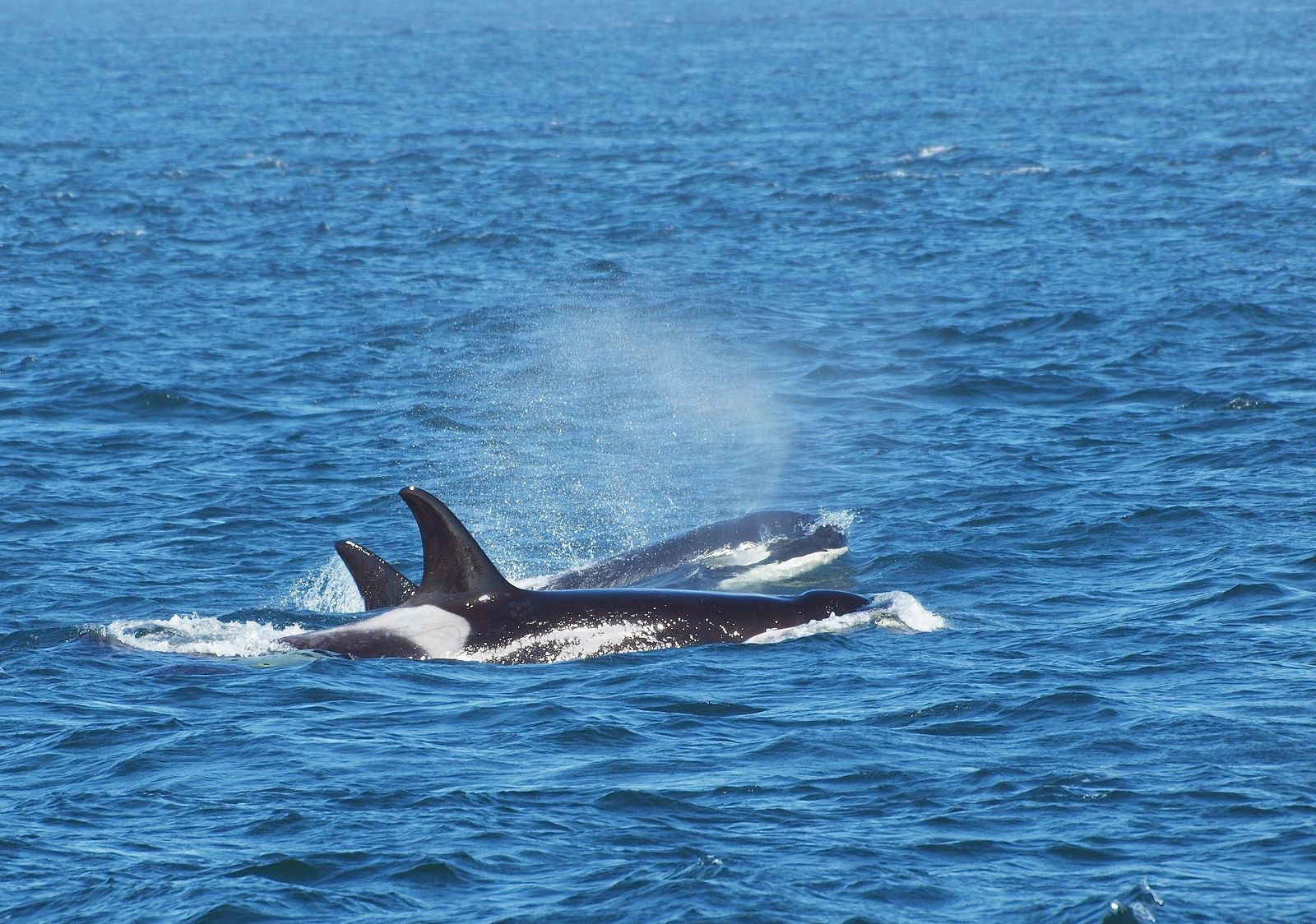 San Juan Islands Whale Watching Can Be Your Next Epic Family Adventure