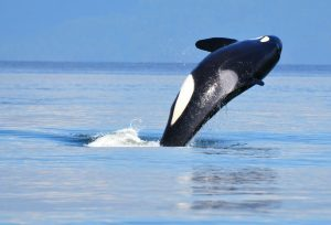 Have a Wonderful Time Whale Watching by Following These Useful Tips