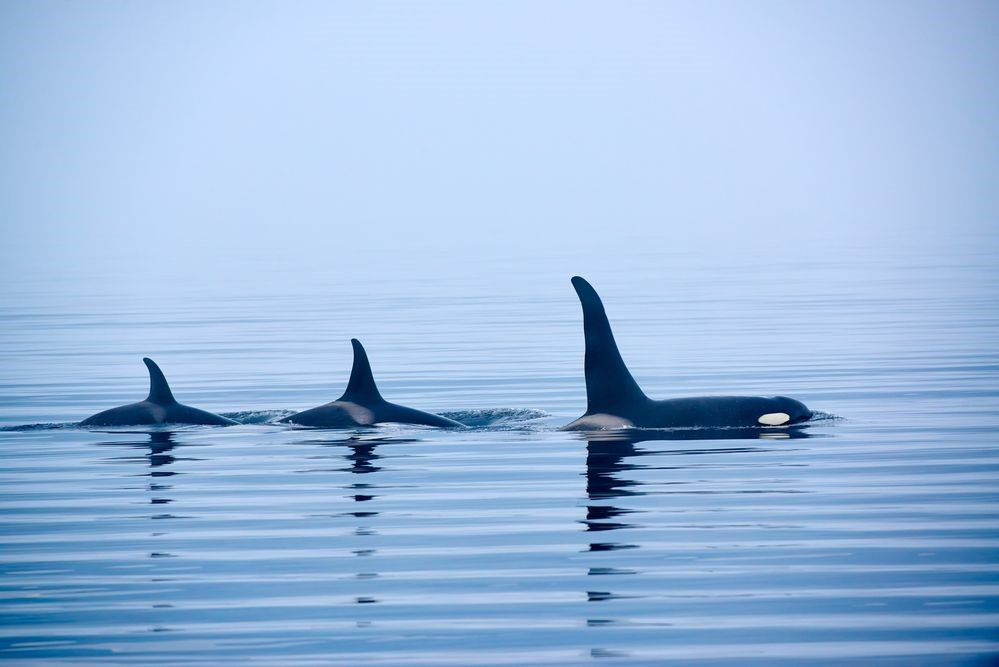 Wildlife-Watching While Cruising the San Juan Islands, Washington